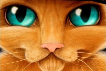 25 de Febrero: La Musicoaventuras del Gato con Botas